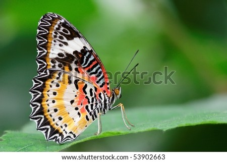Appealing butterfly on a leaf. Photograph in a greenhouse