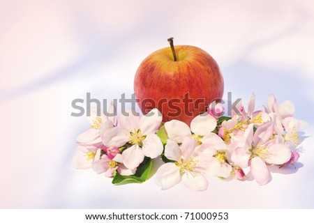 Apple and apple tree blossoms - stock photo