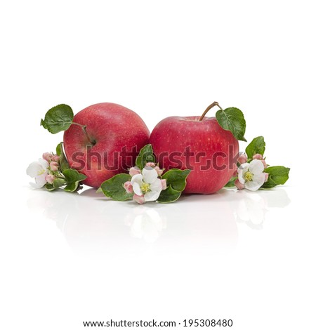 Apple blossom and fruit - stock photo