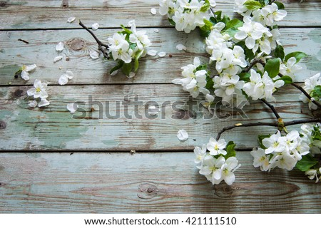 Apple blossom branch on a wooden background