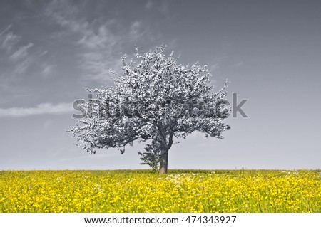 apple blossom on a yellow meadow