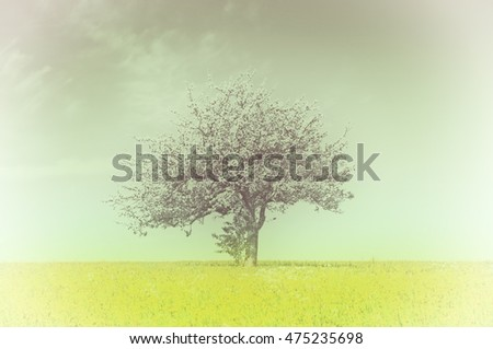 apple blossom on a yellow meadow in vintage view