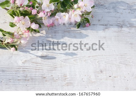 Apple blossom on  white wooden background - stock photo