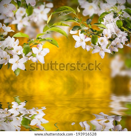 Apple blossom reflected in water - stock photo