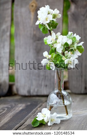 apple blossoms in vase on wooden bench - stock photo