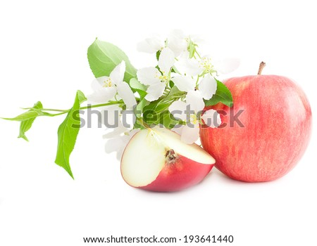 Apple flowers and ripe red apple on a white background  - stock photo