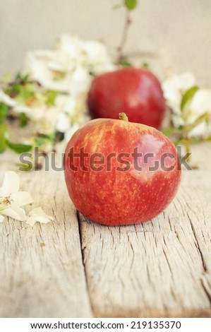 apple flowers and ripe red apples - stock photo