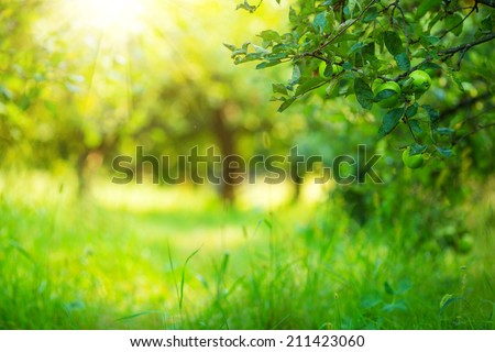 Apple garden green sunny background. Summer and autumn sesonal.  - stock photo