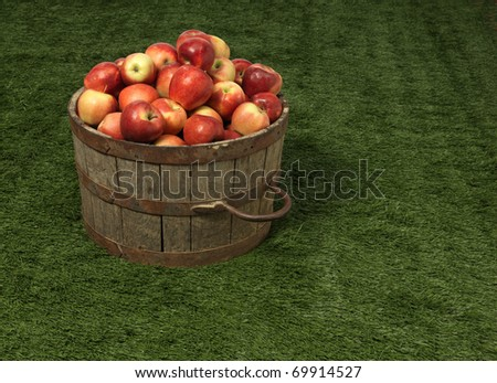 apple, grass, tub - stock photo