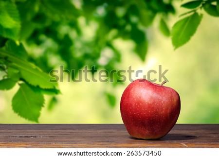 Apple in the garden - stock photo