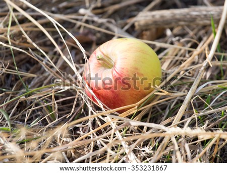 apple lying on the ground in nature