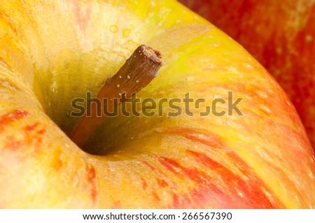 apple macro closeup - stock photo