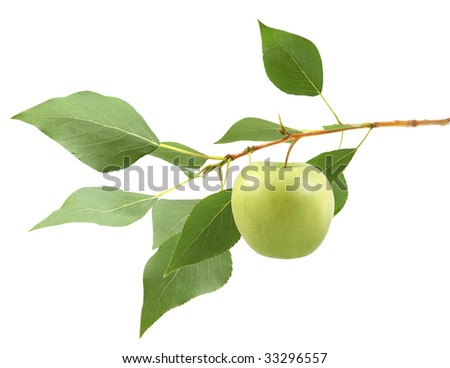 apple on a branch isolated on a white background - stock photo