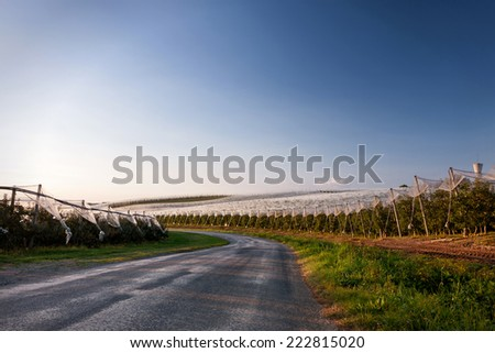 Apple orchard Limousin France. - stock photo
