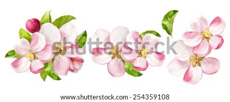 Apple tree blossoms with green leaves isolated on white background. Spring flowers set - stock photo