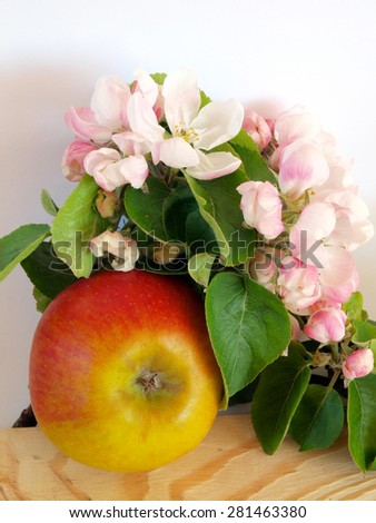 Apple tree branch with blossoms and single ripe apple on wooden table white background close up - stock photo