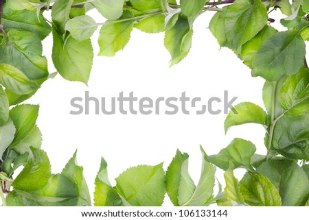 Apple tree branches and  spring leaves abstract isolated  frame background - stock photo