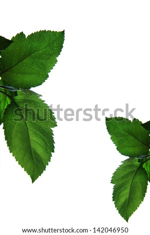 Apple-Tree Leaf - stock photo