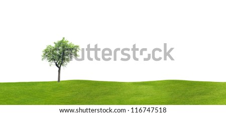 Apple tree on a grassy hill against a white background - stock photo