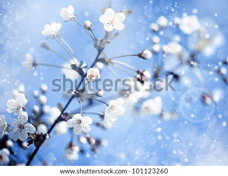 apple tree with flowers under blue skies. Optimistic abstract backgrounds - stock photo
