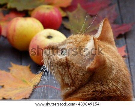 apples and red cat, selective focus