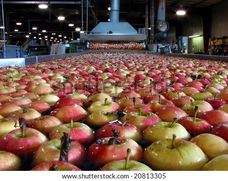 Apples Floating in Water in Packing Warehouse - stock photo
