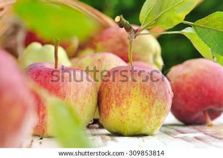 apples from garden with drops on table in garden  - stock photo