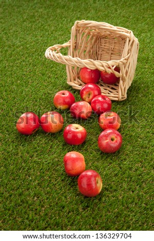 green and red apples in basket. apples got enough sleep from a basket on grass green and red in