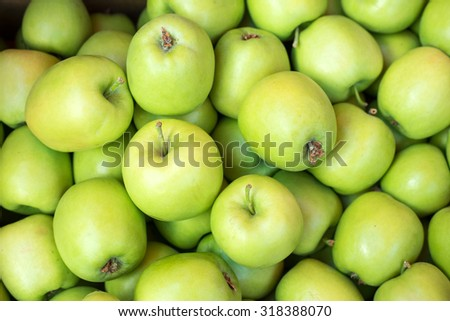 Apples harvesting time / photography of green apples / close-up. Selective focus.