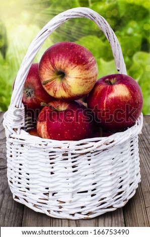 Apples in a white wicker basket on a wooden table  in the garden
