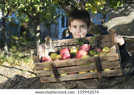 Apples in an old wooden crate on tree. Child authentic image - stock photo