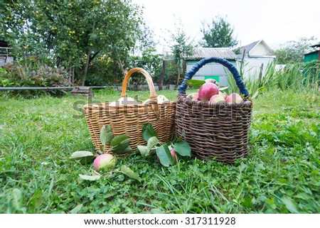 Apples in basket on a grass