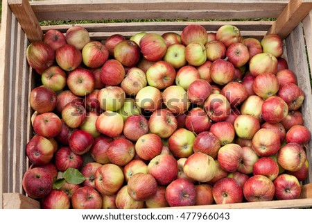 apples in wooden boxes outdoor