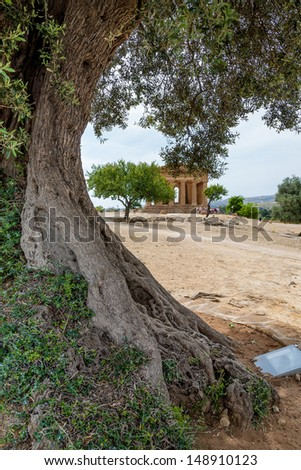 Approximately 600 years old tree in temple valley near Agrigento (Sicily, Italy)