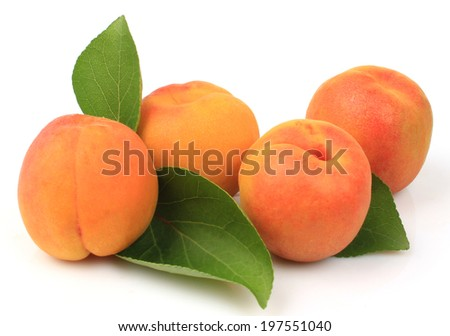 Apricot fruits isolated on white - stock photo