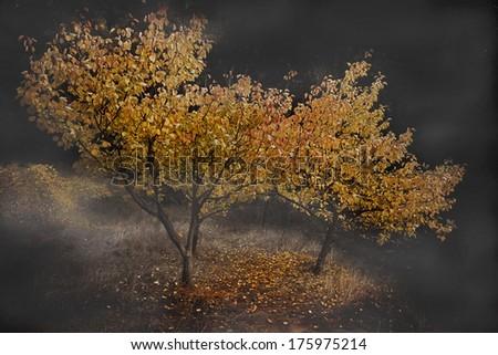 apricot trees in autumn - stock photo