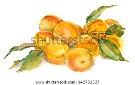 Apricots. Still life. Watercolor painting.