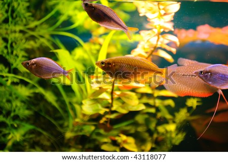 Aquarian fishes - stock photo