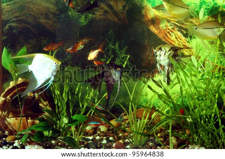 AQUARIAN SMALL FISHES - stock photo