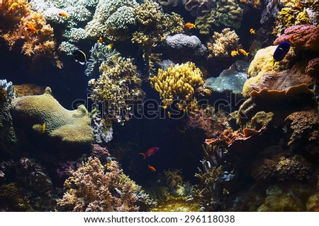 Aquarium background image - stock photo