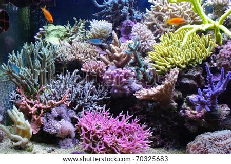 aquarium coral - stock photo
