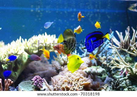 Aquarium corals reef marine aquarium fish - stock photo