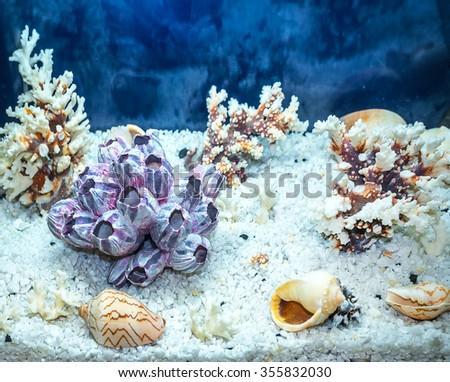 aquarium decoration - stock photo
