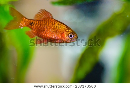 aquarium fish - stock photo
