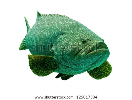 Aquarium fish isolate on white - stock photo