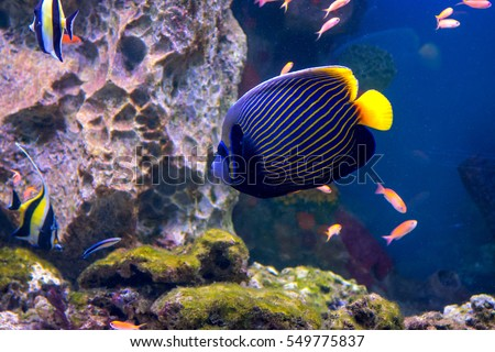 Colorful fish stock photos royalty free images vectors for Colorful freshwater aquarium fish