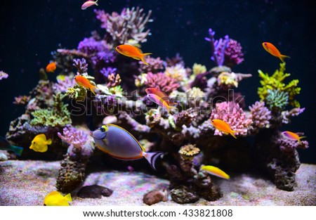 aquarium for background