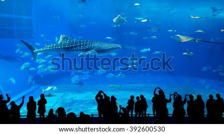 Aquarium in okinawa - stock photo
