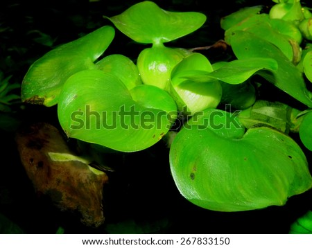 Aquarium plants.  - stock photo