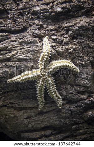 Aquarium star - stock photo